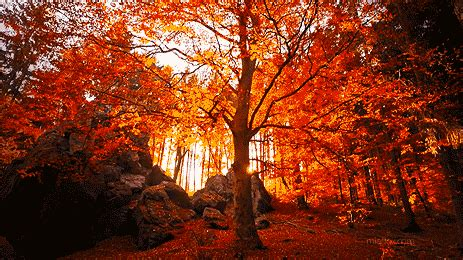 Remarkable Animated Fall Nature Gifs at Best Animations