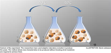 Thermotolerant yeast can provide more climate-smart