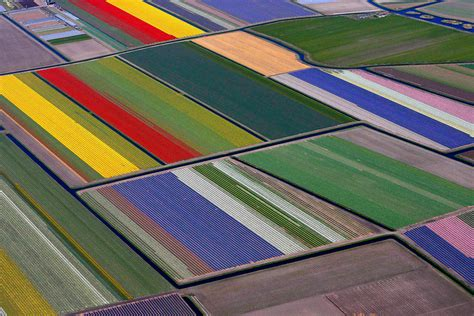 Hot Shots Photos of the Day: Tulip Fields, Bear Cubs