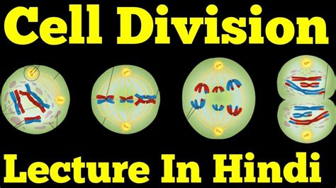 Cell Division & Cell Cycle (Hindi): Mitosis, Meiosis