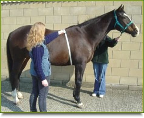 Equi Life Weigh Tape - Measure the Weight of your Horse