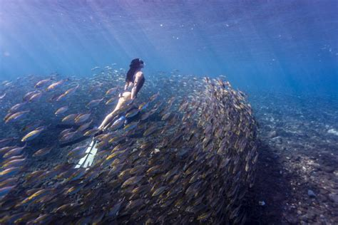 » Real-Life Mermaid Swims In Deep Around Wreckages