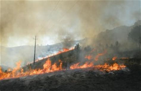 Scorched Earth Policy | Natural History Magazine