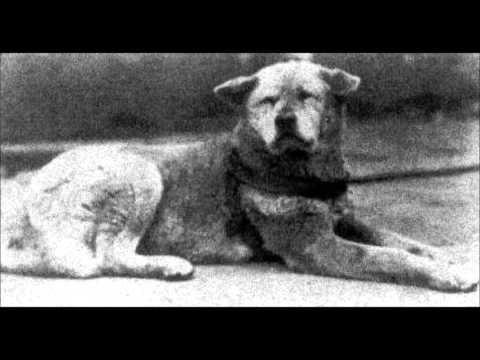 Phil Rey - Battle for Humanity 2015Hachiko A Dogs Story