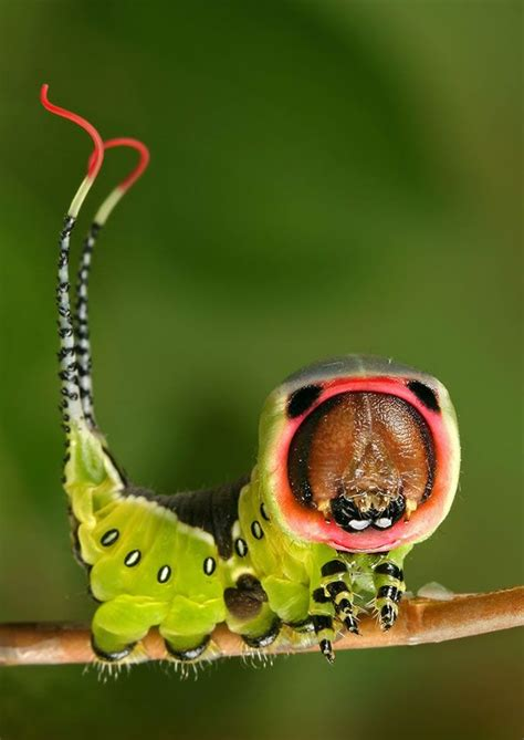 weird bugs | 100 Extremely Detailed Macro Insect Photos