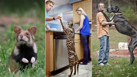 Prodigious pets: five of the world's biggest domestic