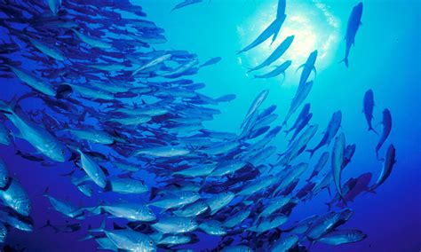 Protecting the World's Common Oceans | Stories | WWF